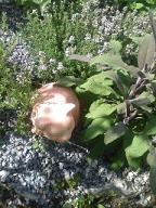 Le jardin aromatique 2
