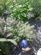 Le jardin aromatique 3